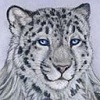 furry snow leopard