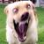 Пёс-объебос