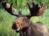 gentle elk