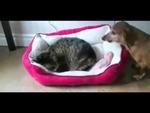 Наглые коты - подборка,Animals,,