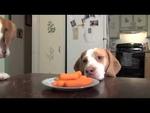 Как собака,сосиски воровала :),Comedy,,