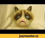 Grumpy Cat: The animatronic,People,,A Grumpy Cat animatronic that is completely hand-made. Functioning eyes and mouth. For more stuff I make: https://www.facebook.com/MyriadSPFX