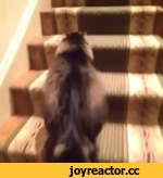 Staircase cat