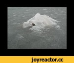 Loch Ness monster from Russia,Entertainment,,Respect!