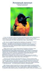 Хохлатый питохуи (латинское название «РНоИш сМсИгоив») О том, что некоторые птицы могут быть опасными, многие имеют представление. Например, не каждый отважится подойти близко к страусам, так как знают, что это грозит сильным ударом их мускулистых ног. А вот казуары на ногах имеют очень острые ши
