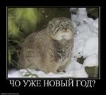 40 УЖЕ новый ГОД? demotivators.ru