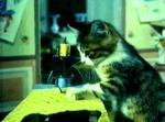 котик шьет на машинке