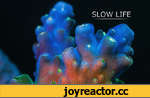"""Slow Life,coral, time lapse, fluorescence, macro, micro, underwater, marine, marine biology, ultra-macro, music, sponge, exotic life, stock footage, 4k,""""Slow"""" marine animals show their secret life under high magnification. Corals and sponges are very mobile creatures, but their motion is only"""