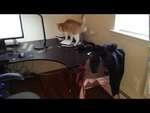 Universal trap for cat / Универсальная ловушка для кота,People,,