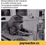 Когда свежо и нет сосисок А в небе полная луна То на душе скребутся люди У одинокого кота