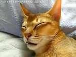 SLEEP TALKING CAT // КОТ ГОВОРИТ ВО СНЕ