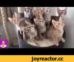 FUNNY ANIMALS COMPILATION (2010 - 2014) HD,Animals,,Funny video with animals of 2010 - 2014th in HD