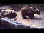 Ворона халявщица,Comedy,,Медведь спас везучую ворону! ↓ ↓ ↓ ↓ ↓ ↓ ↓ ↓ ↓ ↓ ↓ ↓ ↓ ↓ ↓ ↓ ↓ ↓ ↓ ↓ Приколы, смешные видео, фэйлы, падения, подборки, ДТП, забавные животные, политика, интересные происшествия и многое другое на канале → ФЭЙЛ ЗА ФЭЙЛОМ ← https://www.yo