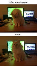 Мой кот до речи Навального