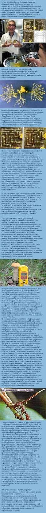 В году 2000 профессор Тошиюки Накагаки (ТовЫуиМ Nakagaki), биолог и физик из университета Хоккайдо (Япония), взял крошечный кусочек жёлтого плесневого гриба и положил его у ^ входа небольшого лабиринта - 30-ти сантиметровой копии лабиринта, применяющегося обычно для проверки интеллекта и памяти мыш