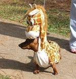 Собака-жирафик