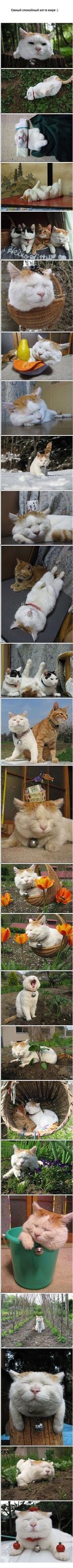 Самый спокойный кот в мире