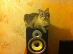 Котейка на колонке
