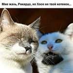 Мне жаль, Рикардо, но Хосе не твой котенок...