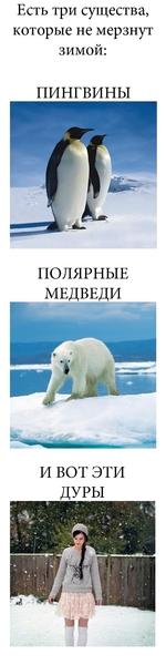 Есть три существа, которые не мерзнут зимой: ПИНГВИНЫ ПОЛЯРНЫЕ МЕДВЕДИ И ВОТ ЭТИ ДУРЫ