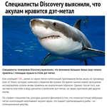 Специалисты Discovery выяснили, что акулам нравится дэт-метал Специалисты телеканала Discovery выяснилии, что внимание больших белых акул можно привлечь с помощью музыки в стиле дэт-метал. Как сообщает СВС, ранее на звуки метал-композиций приплывала белая акула по прозвищу Joan of Shark, которую