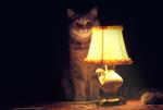 Напоминаю, 31 ДР реактора