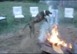 собака прыгает через костер