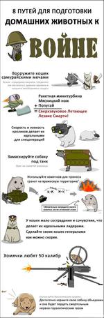 8 путей для подготовки домашних животных к войне