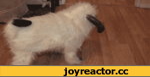 Собака в форме барана