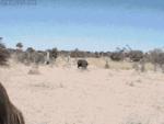 Африканское животное чуть не перевернуло транспорт с людьми