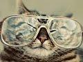 Крутые коты =^_^=,Comedy,Cat (Animal),cat,fun,coub,catcoub,Animal (Film Character),Подборка смешных котов