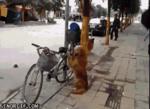 Собака садиться на багажник велосипеда