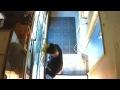 Парень украл питона в зоомагазине (ВИДЕО),People & Blogs,,Парень украл питона в зоомагазине,засунув его себе в штаны Вор,укравший змею,попал в объектив камеры видеонаблюдения в Портленде, штат Орегон The guy stole a python at a pet store and put it in his pants (VIDEO) The thief who stole the snake