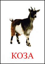 Картинка козы скачать  bussnesworldru