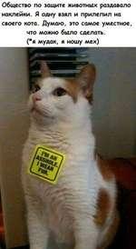 Общество по защите животных раздавало наклейки. Я одну взял и прилепил на своего кота. Думаю, это самое уместное, что можно было сделать. (*я мудак, я ношу мех)