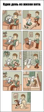Один день из жизни кота: