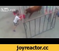Raging Bull Smashes through Bars of cage and Gores Man in shocking video,People & Blogs,Raging,bull,smash,through,bar,cage,gores,man,Raging bull smashes through bars of cage and gores man in shocking video Video shows man being thrown around as a bull attacks him in cage CAGE RAGE Terrifying moment