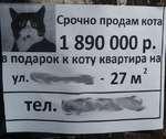 Срочно продам кота подарок к коту квартира