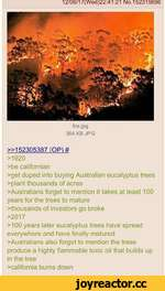 12/06/17(Wed)22:41:21 No.152315696 fire.jpg 364 KB JPG »152305387 (OP)# >1920 >be Californian >get duped into buying Australian eucalyptus trees >plant thousands of acres Australians forget to mention it takes at least 100 years for the trees to mature thousands of investors go broke >20