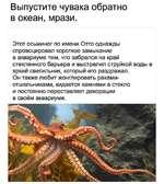 Выпустите чувака обратно в океан, мрази. Этот осьминог по имени Отто однажды спровоцировал короткое замыкание в аквариуме тем, что забрался на край стеклянного барьера и выстрелил струйкой воды в яркий светильник, который его раздражал. Он также любит жонглировать раками-отшельниками, кидается