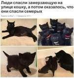 Люди спасли замерзающую на улице кошку, а потом оказалось, что они спасли семерых Знаете ли Вы? • 12 февраля 2017 г.