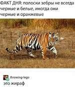 ФАКТ ДНЯ: полоски зебры не всегда черные и белые, иногда они черные и оранжевые ip. throwing-lego это жираф