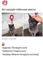 Кот раздаёт побочные квесты 6/29/17,12:45 РЛ №1 * VI Задание: Погладить кота. Требуется: Гладить кота Награда: Можно погладить кота ещё