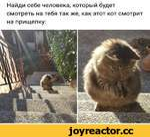 Найди себе человека, который будет смотреть на тебя так же, как этот кот смотрит на прищепку: