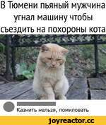 В Тюмени пьяный мужчина угнал машину чтобы съездить на похороны кота Казнить нельзя, помиловать