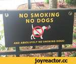 NO SMOKING NO DOGS AND ABSOLUTELY NO SMOKING DOGS!