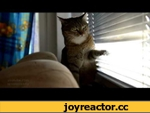 when you're bored (Когда нечем заняться),Animals,кот,прикол,ржач,кошки,животные,cat,lol,pets,kitten,funny,