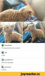 C> m86 a shat bcanstalkofsins Dont call it that please jennamoreci A shitten. hazycapitalist Oh my god is this a cat or a sheep?