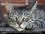 Я вот думаю-если бы кошки умели орить