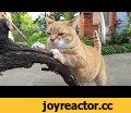 Relaxing Cat Video 57,Pets & Animals,Relaxing Video,relax cat video,relax with cats,the most relaxing cat video,Cat meditation video,cat video to relax,calming cat video,relaxation with cats,Relaxing Cat Video,Video for best relaxation.
